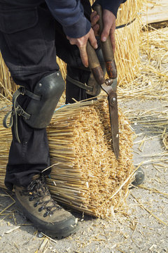 Thatcher cutting a yelm of straw with a pair of shears.