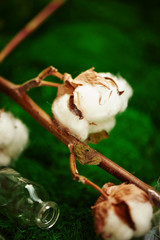 Cotton cotton balls on blurred background. close plan