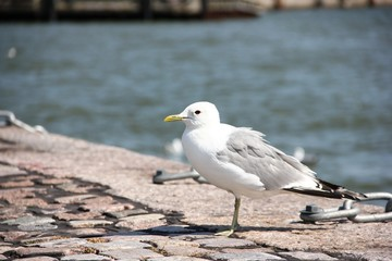 Чайка на набережной на фоне моря