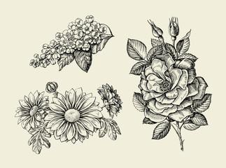Flower. Hand drawn sketch dogrose, rosehip, wild rose, bird cherry, chrysanthemum. Vector illustration
