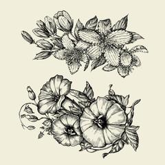 Flower. Hand drawn sketch bindweed, tutsan, hypericum. Vector illustration