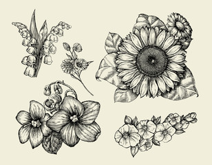 Flowers. Hand drawn sketch flower, sunflower, white lily, violet. Vector illustration