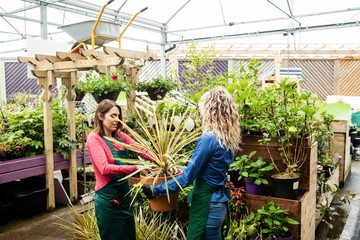 Two female florists holding potted plant