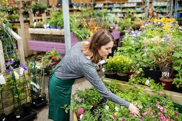 Beautiful woman checking potted plants