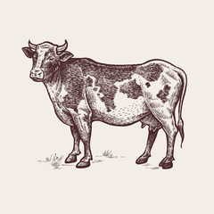 Illustration farm animals - cow