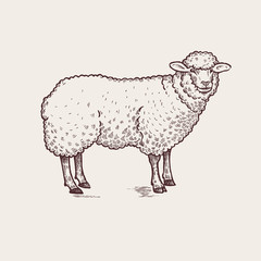 Illustration farm animals - sheep