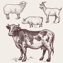Set poultry - cow, sheep, pig, goat. Farm animals