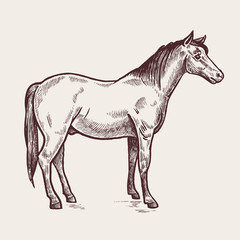 Illustration farm animals - horse