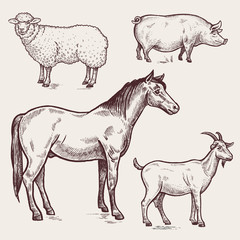 Set poultry - horse, sheep, pig, goat. Farm animals