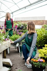 Two female florists talking to each other