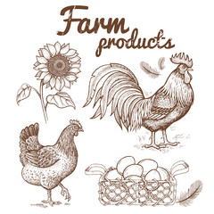 Vector illustration of a rooster, chicken, basket with eggs, sun