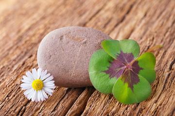 Glücksklee, Stein und Gänseblümchen