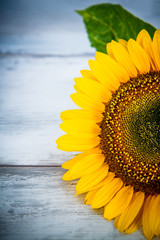sunflower on wood background