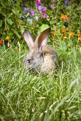 Rabbit hiding in the tall grass