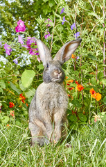 Light gray rabbit stands on a background of beautiful flowers