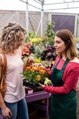Female florist talking to woman