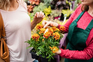 Mid-section of florist talking to woman in garden centre