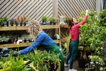 Two female florist working together