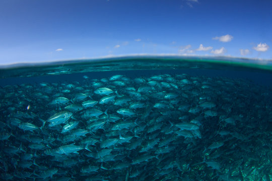 Fish, ocean surface and blue sky