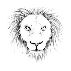 Lion head sketch line art black and white by hand drawing portrait of animal.