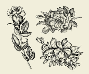 Flowers. Hand drawn sketch flower, rose, floral pattern. Vector illustration