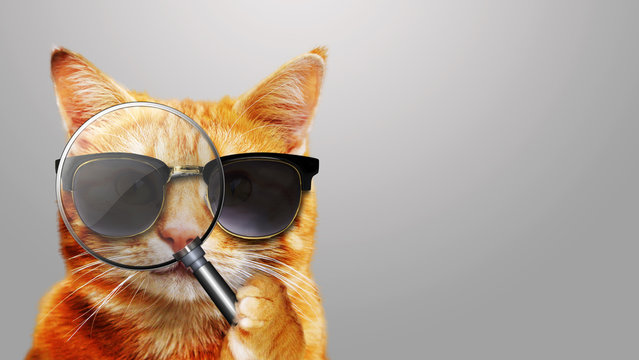 Katze mit Lupe - Cat with magnifier and sunglasses
