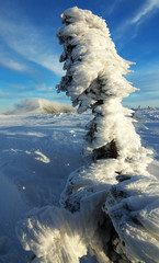 Frosted Tree Covered with Snow, Giant Mountains, Czech Republic