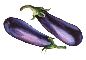 Eggplant. Hand drawn watercolor painting on white background.