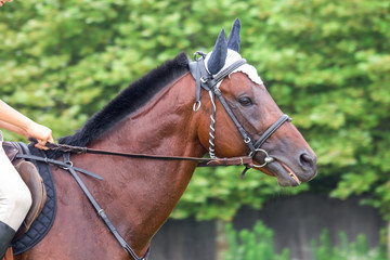 Portrait of beautiful horse with rope halter