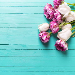 Violet and white tulips flowers on bright turquoise  wooden  bac