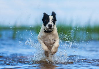 Fotoväggar - Running puppy of watchdog over water.