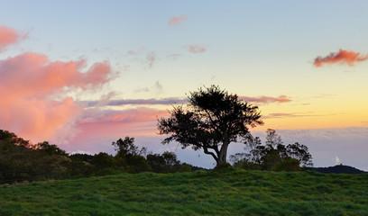 Prairie de la Plaine au crépuscule, La Réunion.