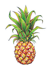 Pineapple on a white background. Graphic drawing. Tropical fruit. Handwork