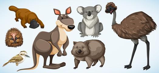 Different types of wild animals in Australia