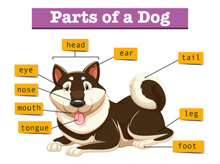 Diagram showing parts of dog