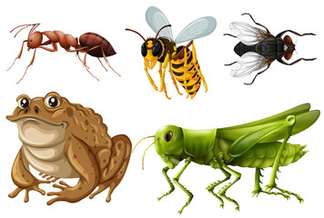 Set of different kinds of insects
