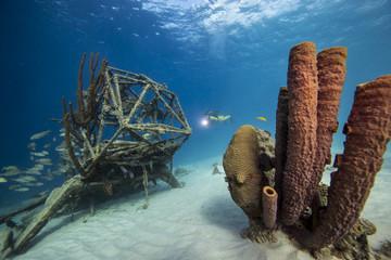 Unterwasser - Riff - Schwamm - Wrack - Flugzeugwrack - Tauchen - Curacao - Karibik