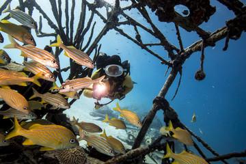 Unterwasser - Riff - Fisch - Wrack -Taucherin - Tauchen - Curacao - Karibik