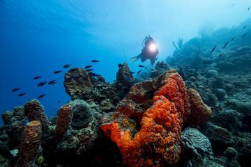 Unterwasser - Riff - Fisch - Schwamm - Koralle -Taucher - Tauchen - Curacao - Karibik
