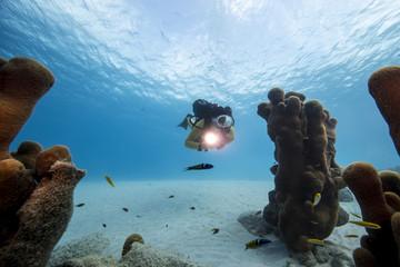 Unterwasser - Riff - Taucher - Tauchsport - Koralle  - Tauchen - Curacao - Karibik