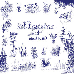 Doodle, hand drawn flowers and berries. Blue outlined design elements. Floral illustration.