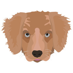Illustration Golden Retriever Puppy