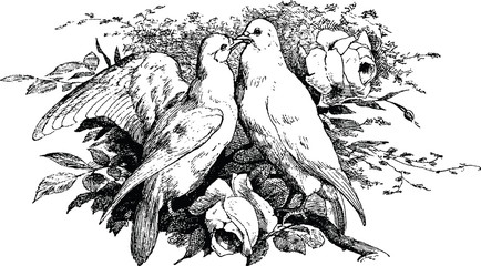 Vintage clipart pigeon