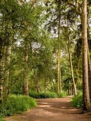 Summer walk through woodland at Styal Country Park, Styal, Cheshire, UK