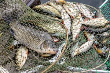 Fishing, raw fish, catch.