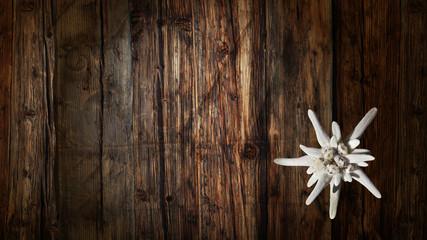 Edelweiss auf altem Holz