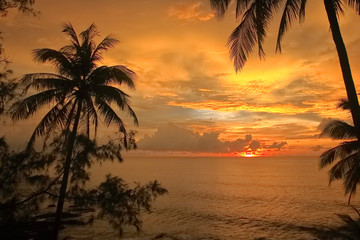 silhouette of coconut palm trees and sunset  on the beach
