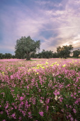 Vertical Landscape With Trees And Colorful Flowers Meadow