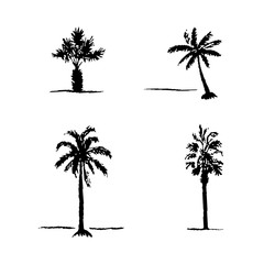Set of hand drawn sketch palm trees. Vector palm trees
