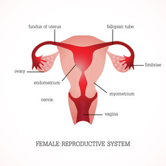Structure and function of Human Female reproductive.